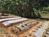 严格执行国家标准《聚乙烯吹塑农用地面覆盖薄膜》,贵州省开展专项整治行动